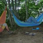 ...avant de faire la sieste ACCROCHES aux arbres